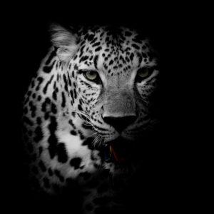 d_animals-35