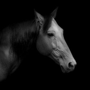 sh_animals-83